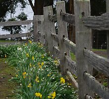 the fence  by janfoster
