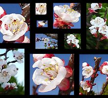 Apricot Blossom Collage by taiche