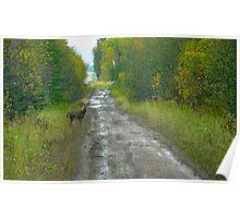 Deer on The Road...Better Run! Poster