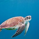 Sea Turtle by jnhPhoto