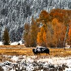 An October Day in the Grand Tetons by PGornell