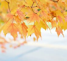 Autumn is a second spring when every leaf is a flower-Albert Camus by photographyjen