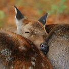 Sleep well my deer by Alan Mattison