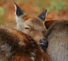 Sleep well my deer by Alan Mattison IPA