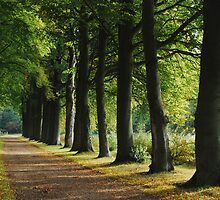Just another beech-tree lane in mid-October by jchanders