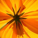Cosmos Captured by jayant
