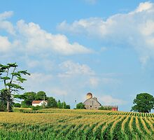 Landscape: York Region farmstead by AskinImages