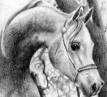 Arabian Halter Horse Portrait by Oldetimemercan