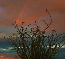 Ocotillo Rainbow by Barbara  Brown