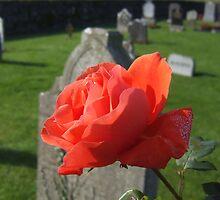 Graveyard Rose by Munich