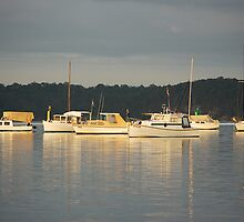 Sunrise on Warners Bay NSW Australia by Bev Woodman
