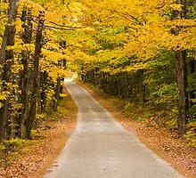 Long Way Home by Monica M. Scanlan