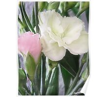 Pink and White Carnations 2 Poster