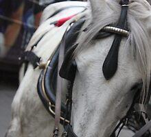 Bored Horse by ehanna93