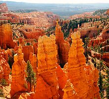 Fairyland Point, Bryce Canyon by Olga Zvereva