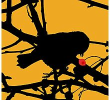 Berry Hungry Photographic Print