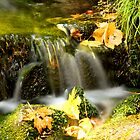 Fern Spring in Fall by Micci Shannon