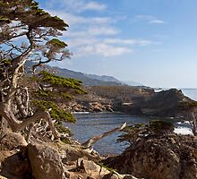 South Point, Point Lobos State Reserve (Carmel, CA) by Barb White