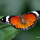 Butterflies At Their Best by Pam Moore