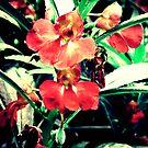 Hong si de Hua (Red Flowers) by eyesoftheeast