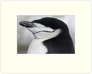 "Chinstrap Penguin ~ ""Sweet Dreams"" by Robert Elliott"