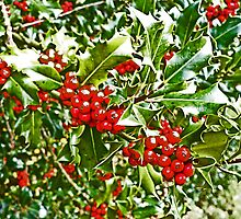 Holly and Berries by bluesand