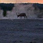 Bull Elk at Twilight by Jennifer Nestler