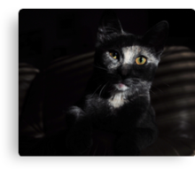 Jasper's evening repose: My 1st Red Bubble Feature Page image! Canvas Print