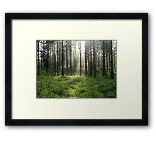 Misty Mountain Framed Print