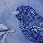(detail of) Superb Fairy Wrens by jobanana