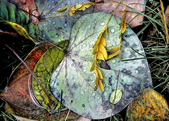 Nature's Paint Box by Nadya Johnson
