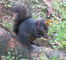 Black Squirrel by artwhiz47