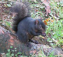 Black Squirrel by artwhiz47