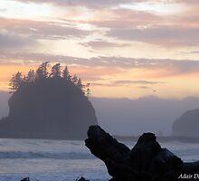 Ocean Dreams by Adair  Davidson