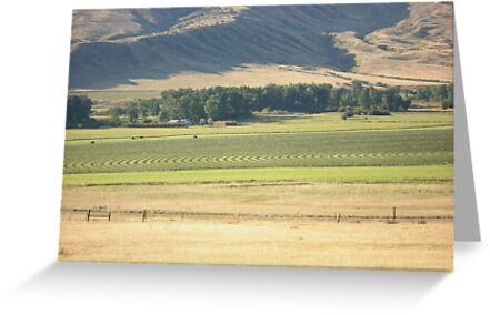 Alfalfa Field by May Lattanzio