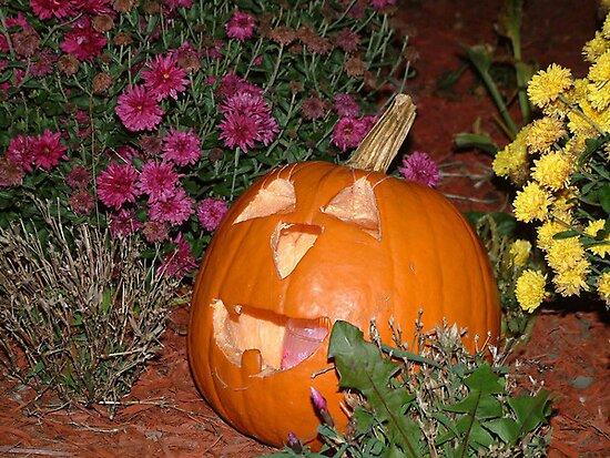Pumpkin Garden by foxyphotography