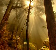 Afternoon mist, Mount Buffalo by Kevin McGennan