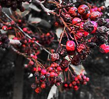 Mottled Red Berries. by Ruth  Jones