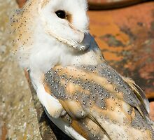 Barn Owl by BizziLizzy