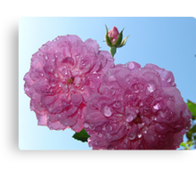 pretty in pink- support breast cancer research Canvas Print