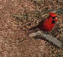 Cardinal On The Branch In Burlap by Linda Miller Gesualdo
