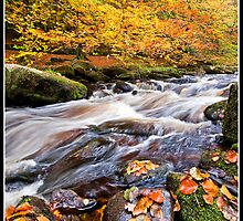 Autumn falls by Shaun Whiteman