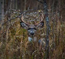 Autumn Camoflage by Ian Benninghaus