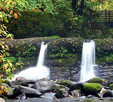 McDowell Creek Falls by Rhonda  Thomassen