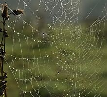 Morning Dew by Steve  Liptrot
