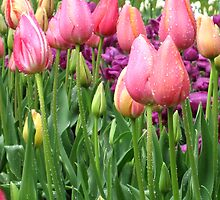 rainy tulips by selbylouise