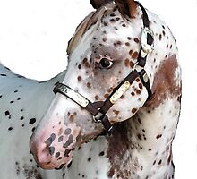 Appaloosa Yearling Horse Portrait by Oldetimemercan