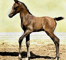 Arabian Foal In Watercolors Horse Portrait by Oldetimemercan