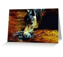 Drink New Forest Pony Portrait Greeting Card