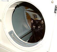 Pandora in the Dryer by ys-eye